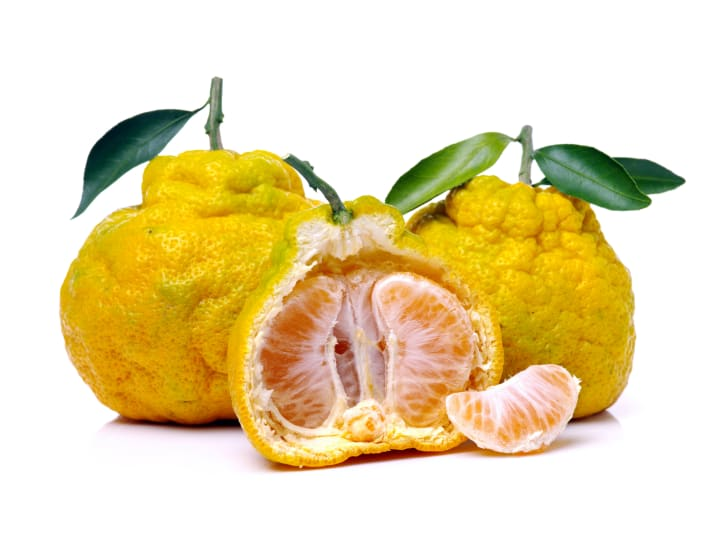 Two yello ugli fruit on a white background with an ugli fruit cut in half in front of them.