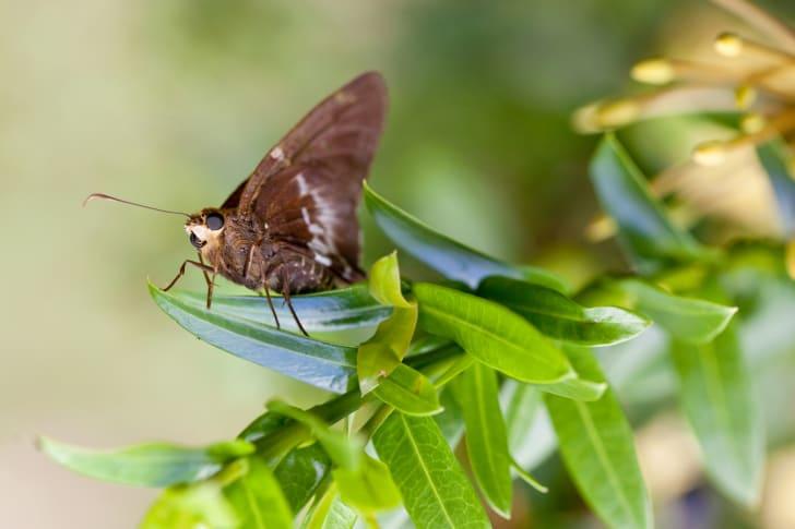 A moth rests on a leaf.
