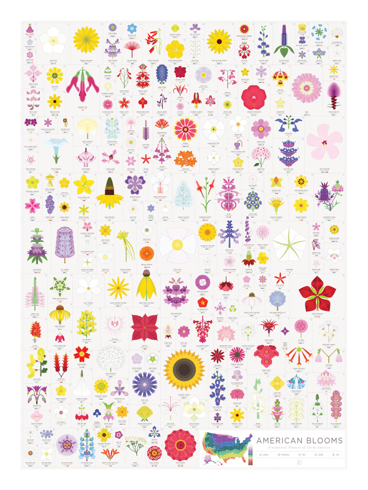 Pop Chart Lab's American Bloom poster