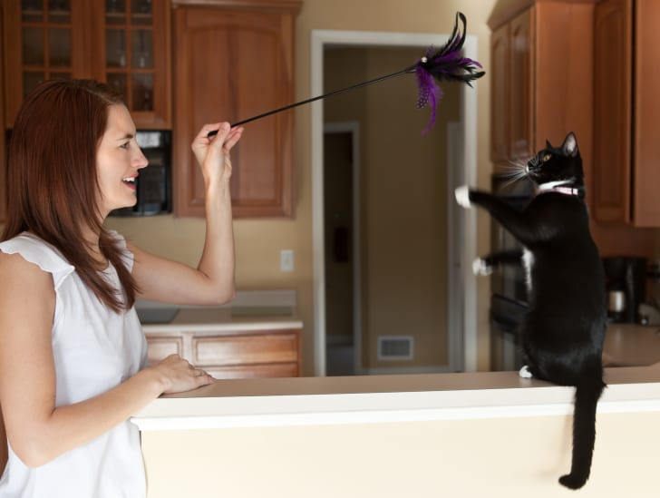 woman, cat, and feather toy