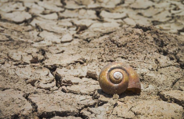 Desert snail on the ground.