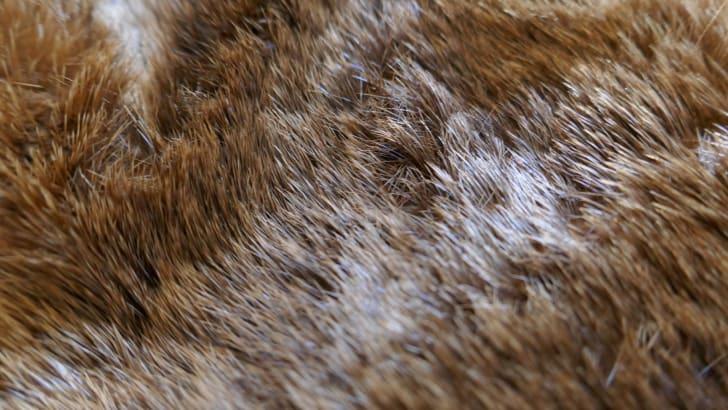 A close-up of otter fur.
