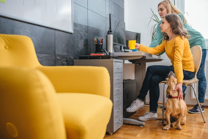 Woman working on a computer while petting a dog.