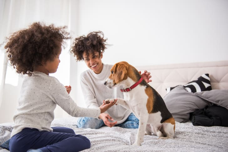 Child and mother playing with a dog on a bed.