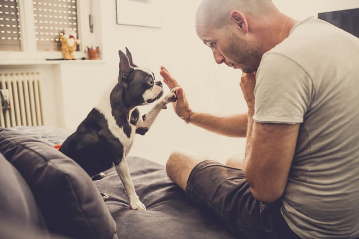Man high-fiving his dog.