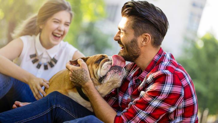 Large bulldog licking a laughing man.