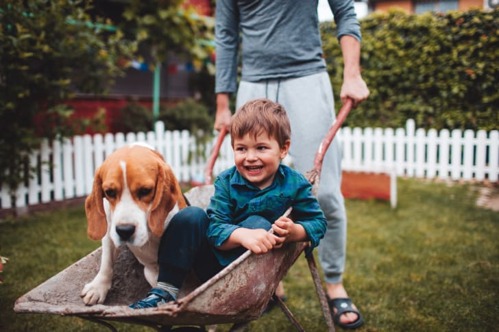 A young boy having fun with his dog.