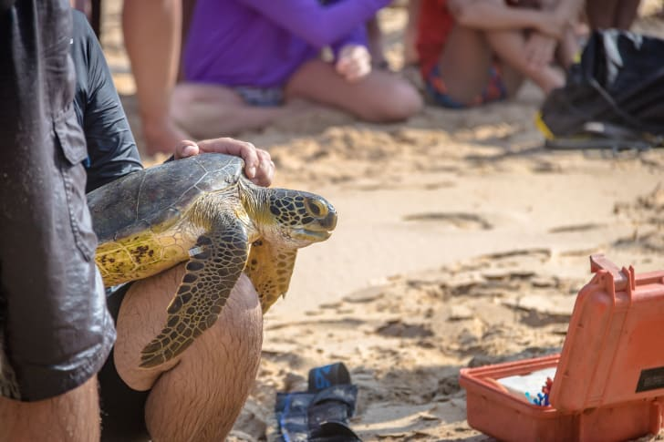 A person holding a sea turtle