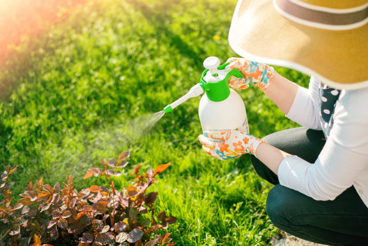 Woman spraying plants in her garden