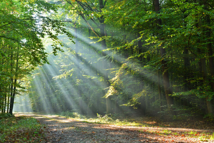 Sun shining in the woods