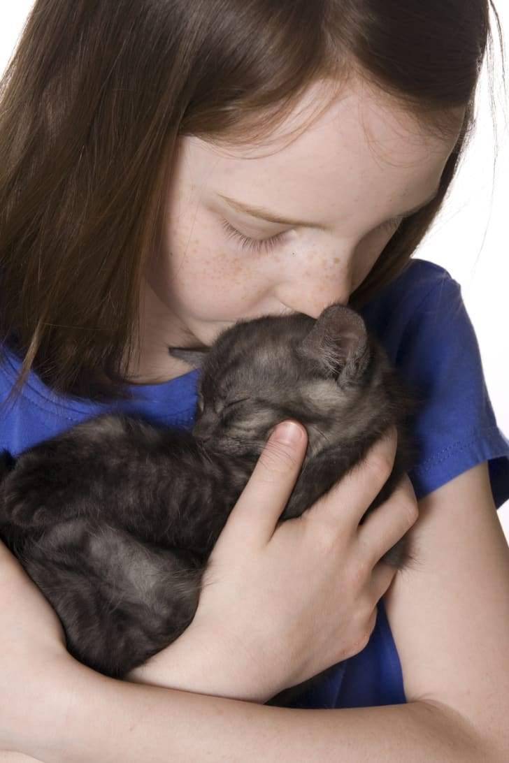 A young girl in a blue shirt nuzzles a grey kitten.