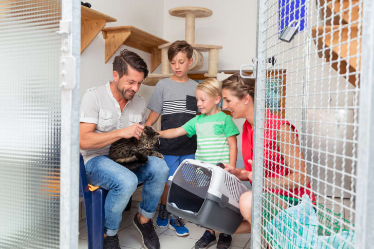 A family pets a grey striped cat at an animal shelter.
