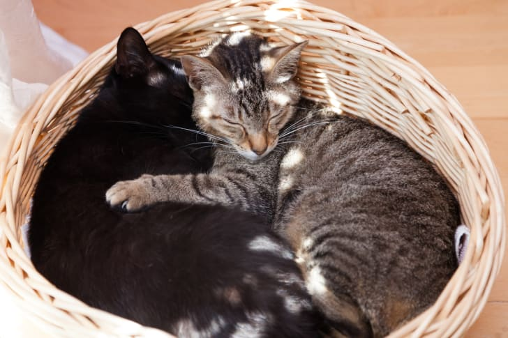 A black cat and a grey cat snuggle together in a wicker basket.