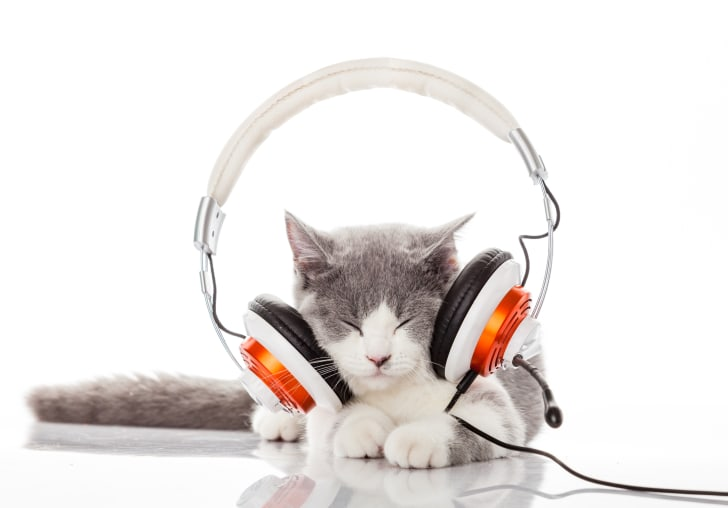 Gray kitten closes eyes while having headphones on.