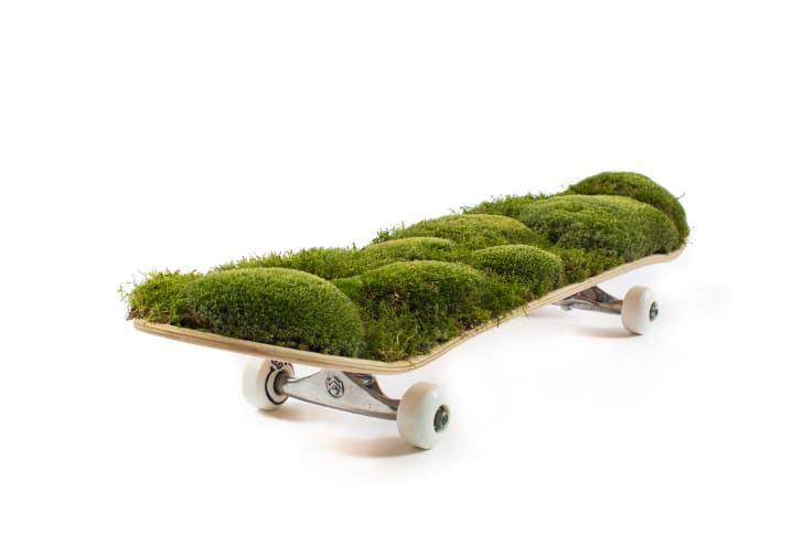 A skateboard covered in mounds of greenery