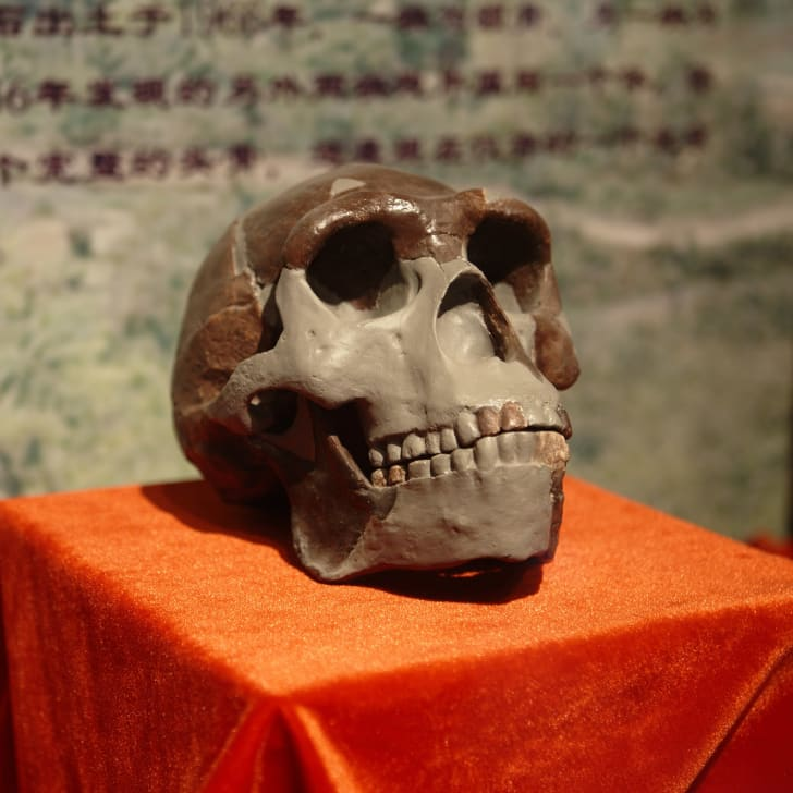 A replica of the Peking Man Skull