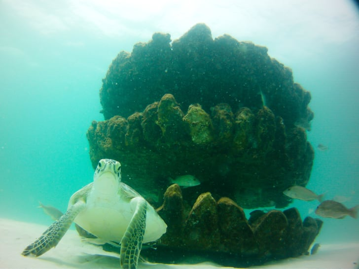 A turtle reef