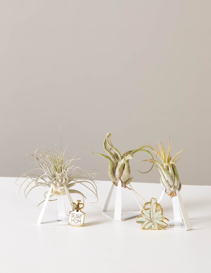 The Sill plant set