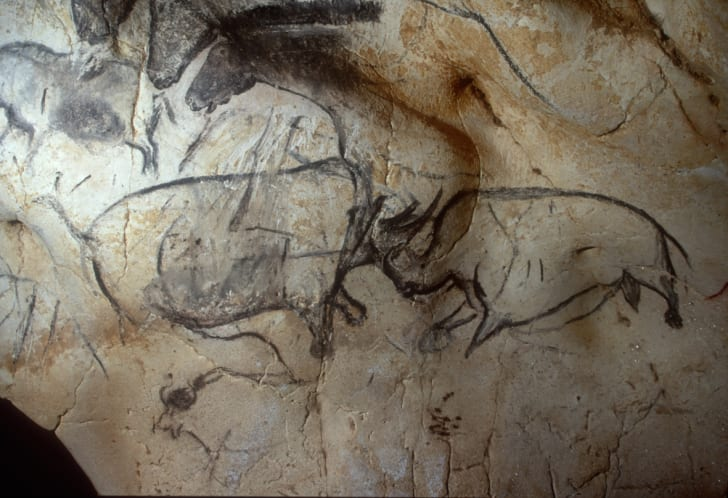 A drawing of rhinos inside the Chauvet cave