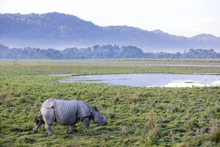 Rhinoceros in a field with a pond