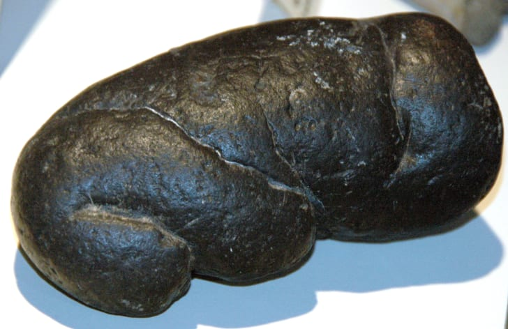 Coprolite attributed to megalodon