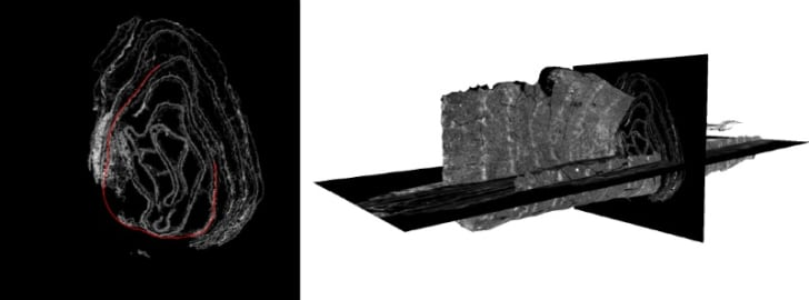 A digital CT scan of a damaged scroll that is being reconstructed
