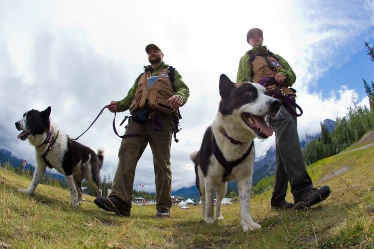 Handlers walking dogs.