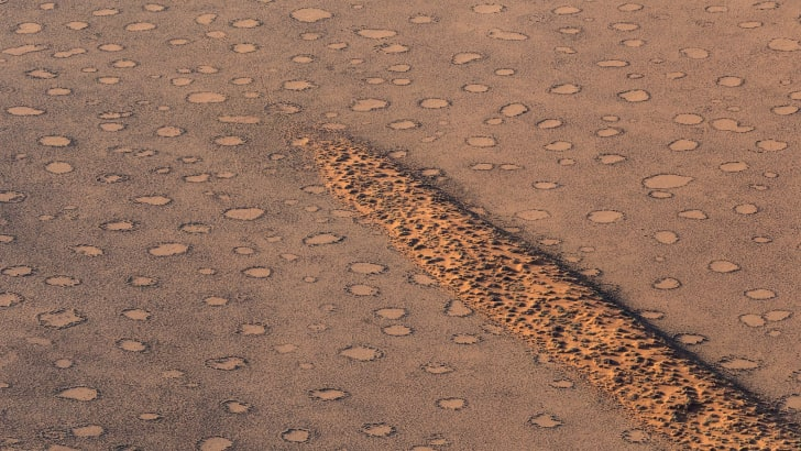 geographic features called fairy circles in namibia, created by termites and plants