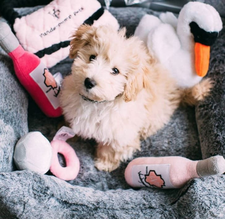 Vanderpump sangria dog toy