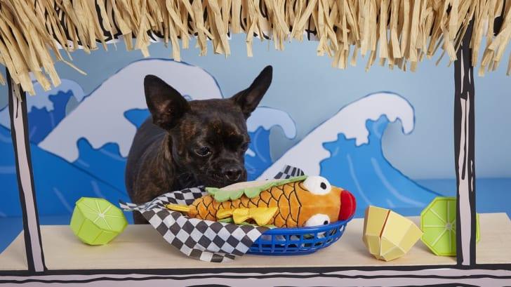 fish taco dog toy
