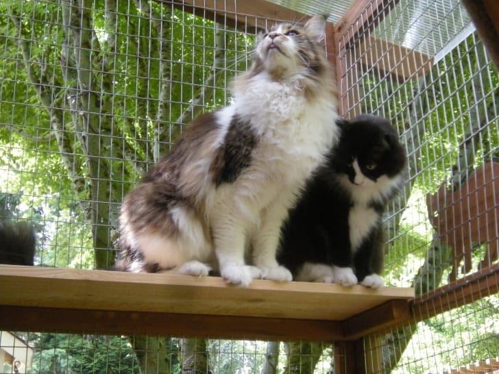 Cats in cat patio.
