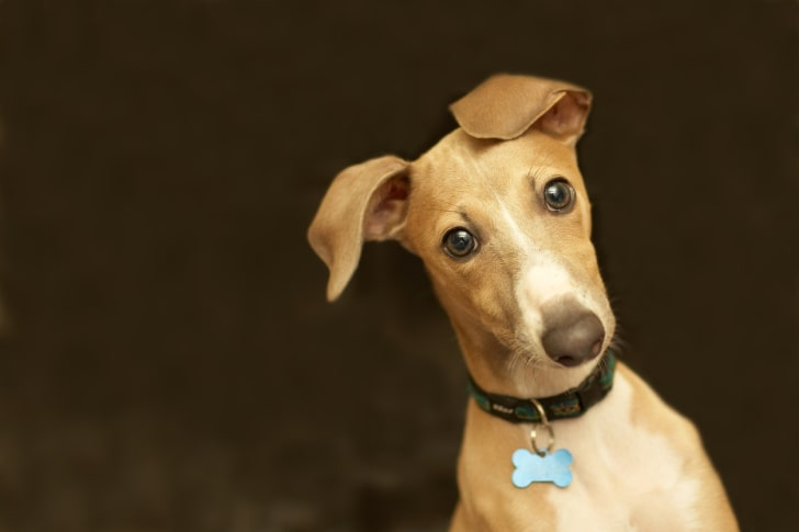 cute dog with head tilted