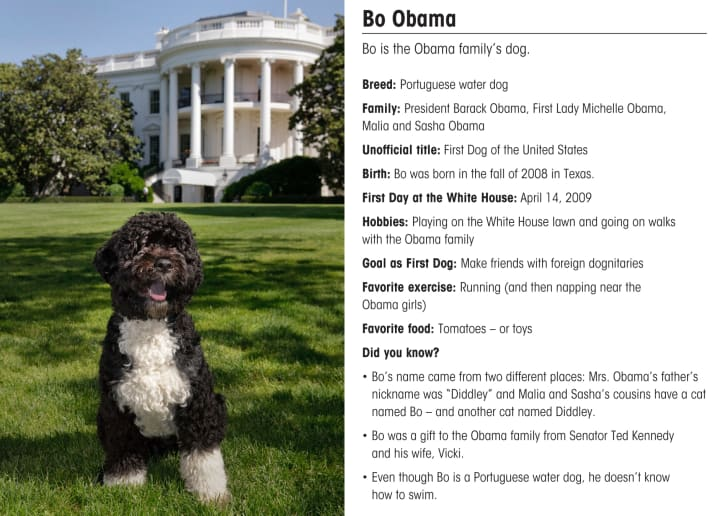 Bo Obama sits on the White House lawn.