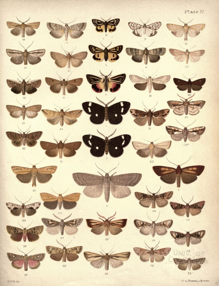 Collection of New Zealand moths and butterflies