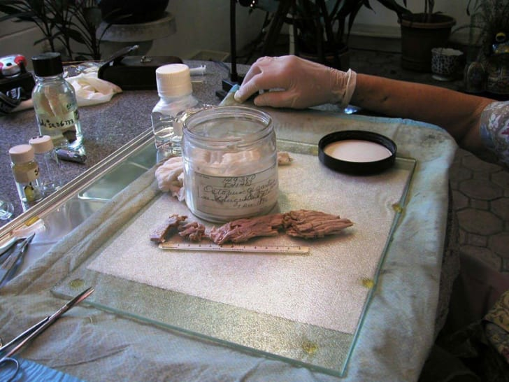 Tissue samples of the St. Augustine Monster at the National Museum of Natural History