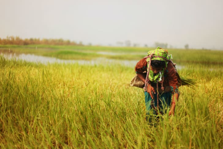 A woman works in a field