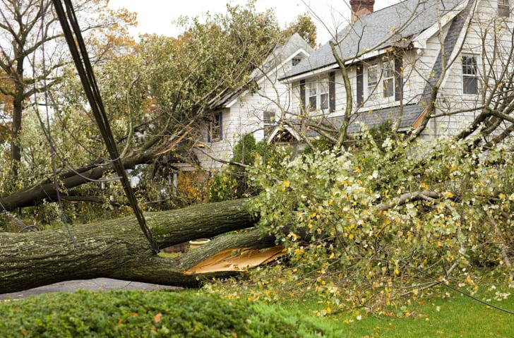 Tree branches down in front of a house.