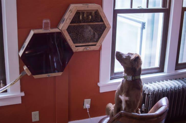 A dog observes a BEEcosystem panel