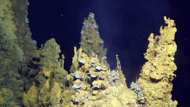 Sulfide chimneys at the Urashima vent site in the Pacific