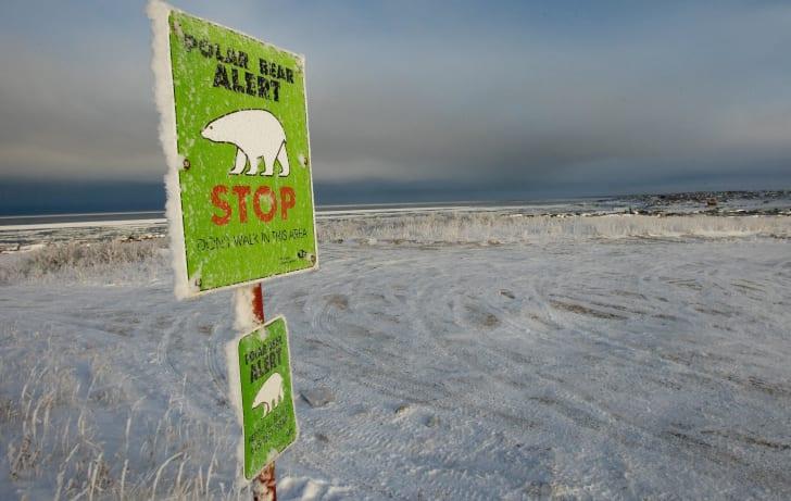 A green sign in a snowy field reads 'Polar Bear Alert: Stop.'