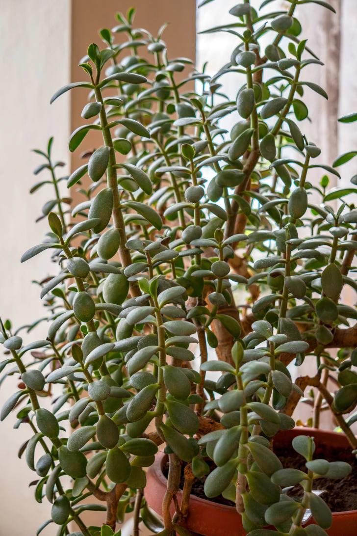 Closeup of an indoor houseplant.