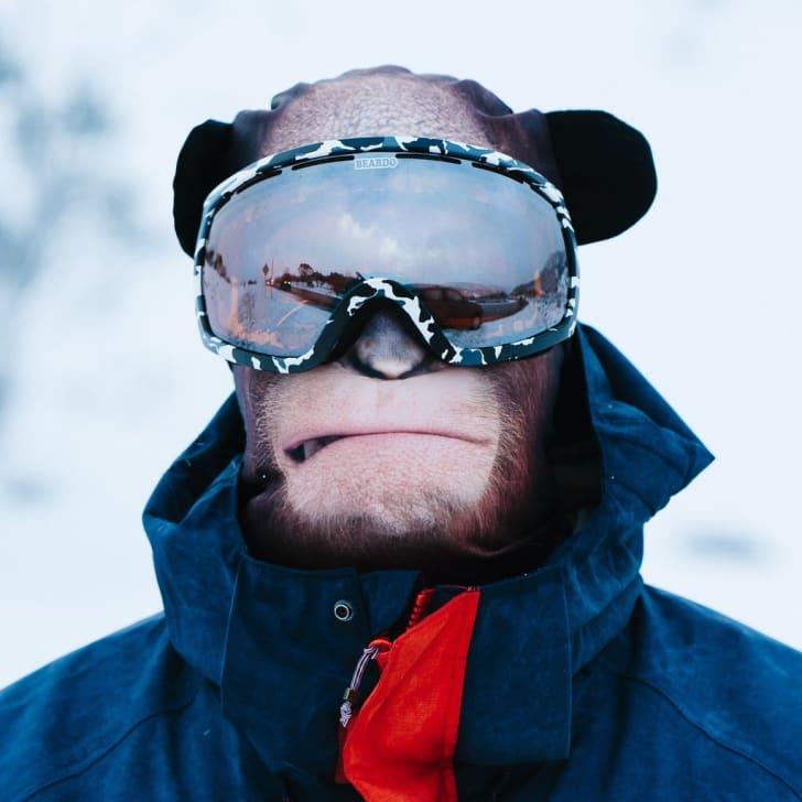 Animal ski mask.
