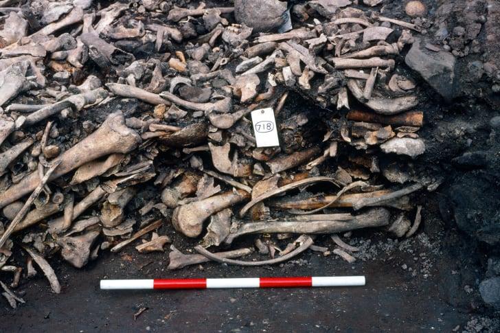detail of mass viking grave at repton