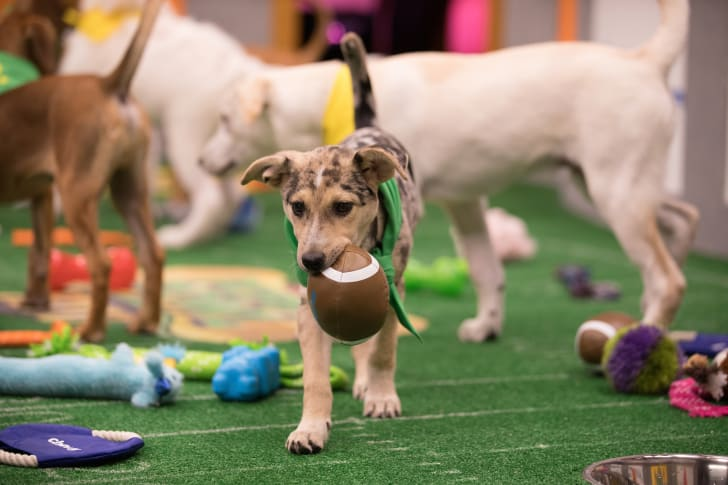 Ana competes in Puppy Bowl XIV