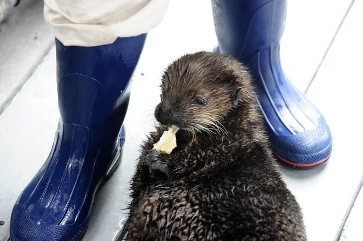 Otter !!