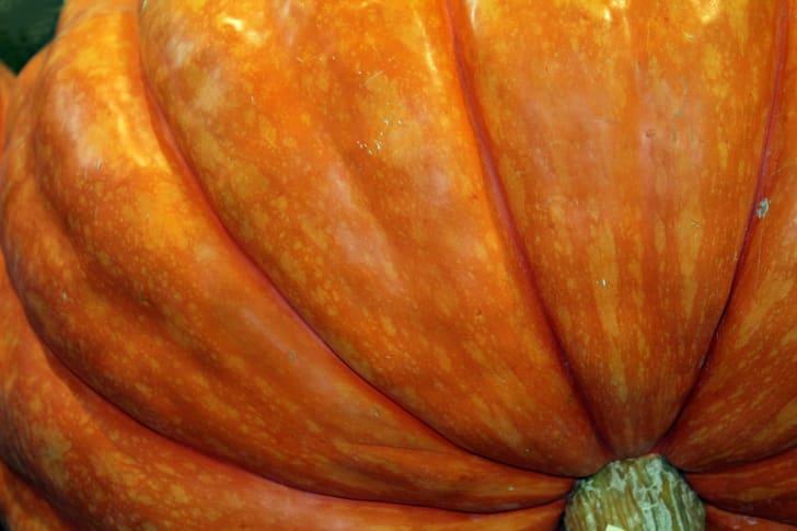 Close-up of a giant pumpkin.