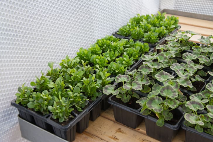 Boxes of plants near a wall of Bubble Wrap.