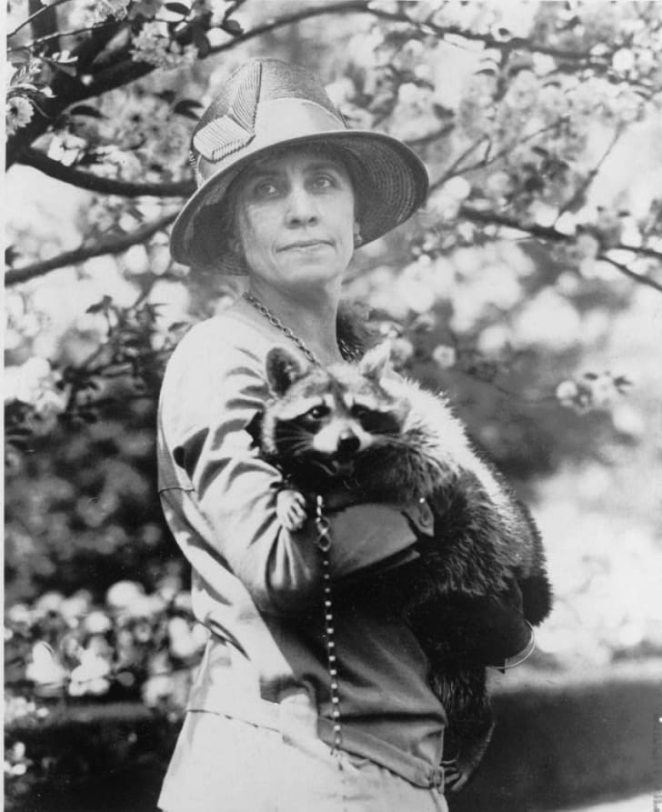 First Lady Grace Coolidge holding Rebecca the raccoon.