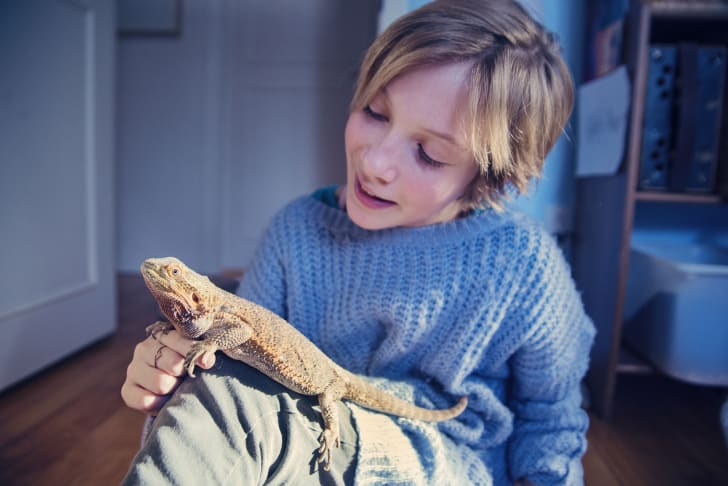 kid playing with lizard pet in bedroom