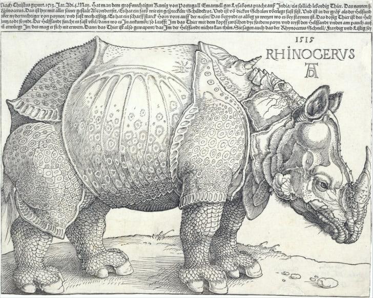 Albrecht Dürer's 1515 woodcut of a rhinoceros